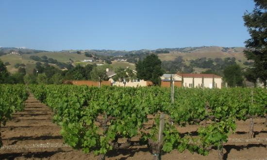 Guglielmo Winery, Morgan Hill, CA (April 2015)