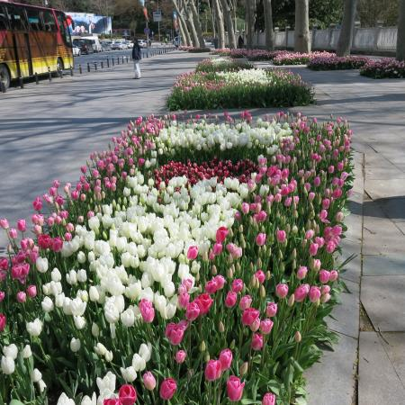 Istanbul Custom Tours-Private Day Tours: Small example of tulip.