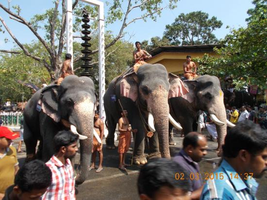 "Guruvayur ""Anayottam(Elephant Race)"" in progress ..."