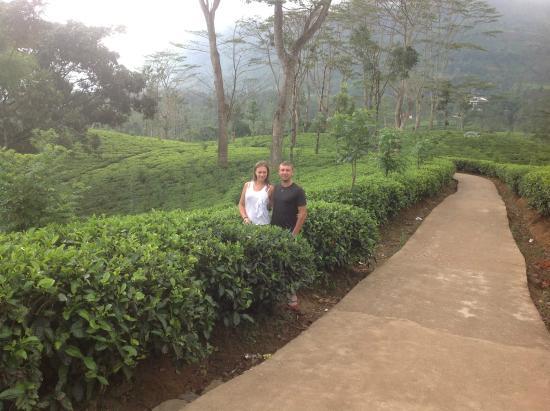 Μπεντότα, Σρι Λάνκα: На плантациях )