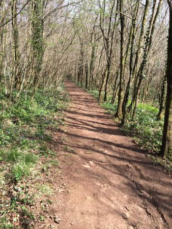 Forest Stoves and Fires Limited: Such a beautiful walk