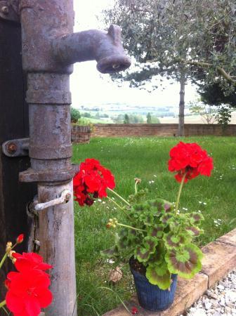 La Contea: Perfecto Italia