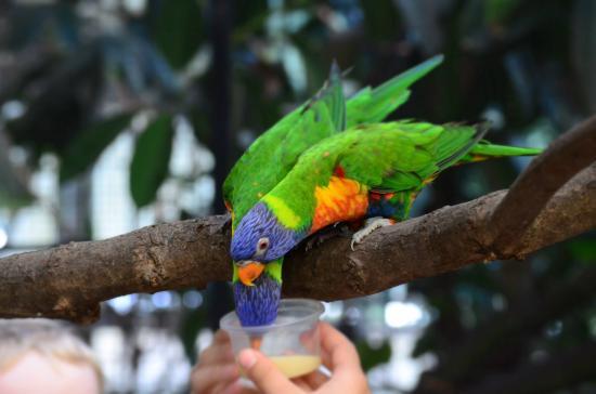 Weltvogelpark Walsrode: Kids love feeding birds.