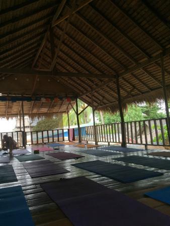 Oasis Yoga: open air studio