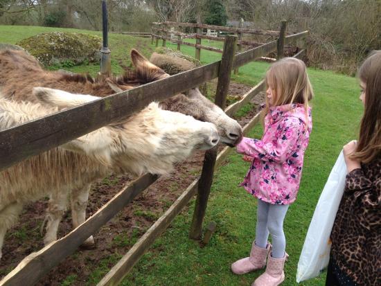 Long Barn Cottages: Donkeys
