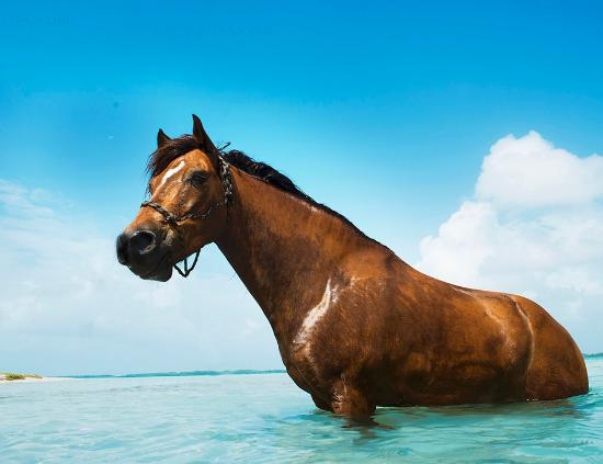 Horse Ranch Bonaire