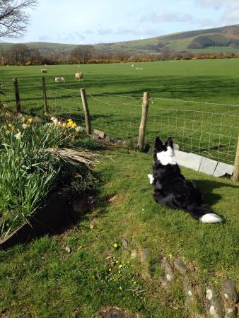 Tyn-Yr-Eithin Bed and Breakfast: Garden view in the Spring