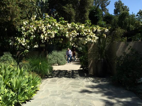 Rose Garden Picture Of Los Angeles County Arboretum Botanic Garden Arcadia Tripadvisor