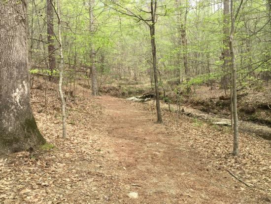 Umstead State Park: View from Potts Trail