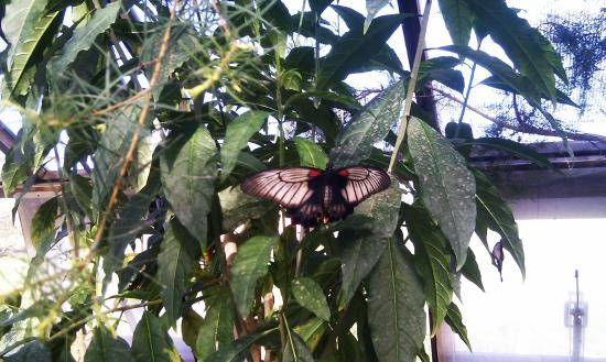Butterfly house project