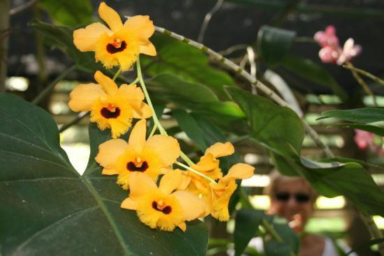 Soroa Orchid Botanical Garden