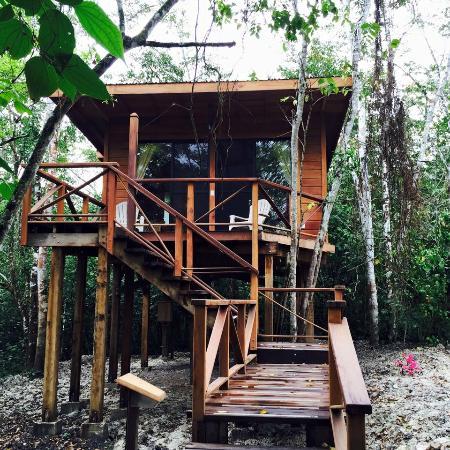 Vanilla Hills Lodge : The Tree House Lodge