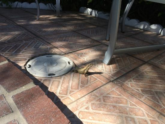 Shore Haven Resort Inn : Near jacuzzi, lizard sunbathing