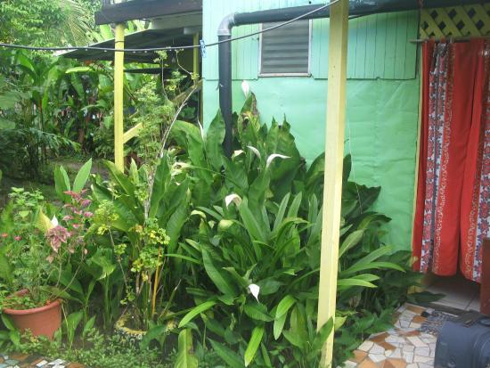 Veronica's Place Cabinas: El jardín