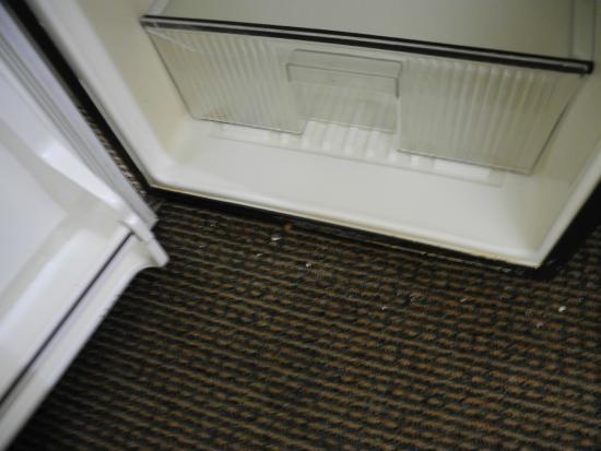 Quality Inn Plainfield: Carpet with open refrigerator