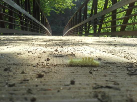 Willow River State Park: Neat looking caterpillar. I also saw a stick bug a bit later.