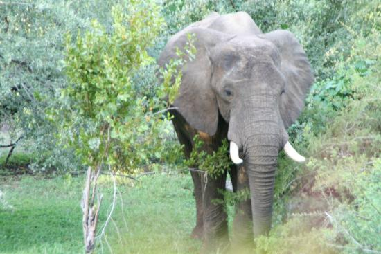 Ilala Lodge: Guest by the room!
