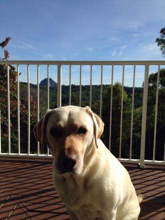 Cooroy Country Cottages: Dog friendly cottage