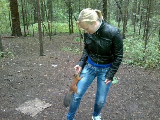 Chernyayevsky Forest