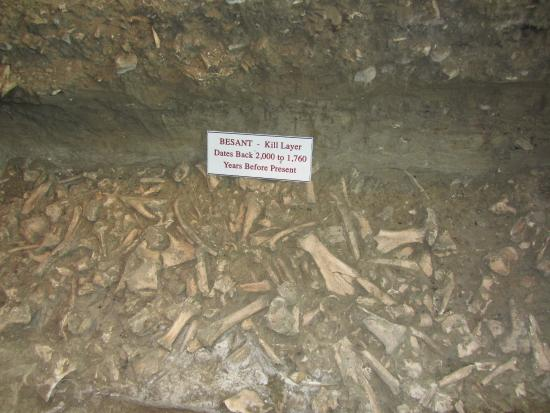 Wahkpa Chu'gn Archaeological Site: Thousands of 2,000 year old buffalo bones discovered in various layers of soil.