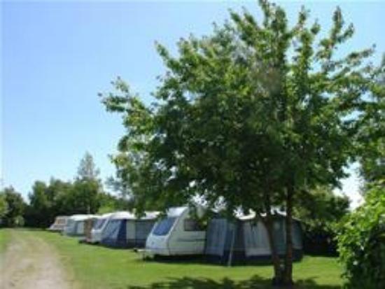 Acorn Camping & Caravan Park: Site