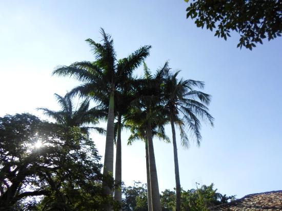 Resultado de imagem para palmeiras lindas