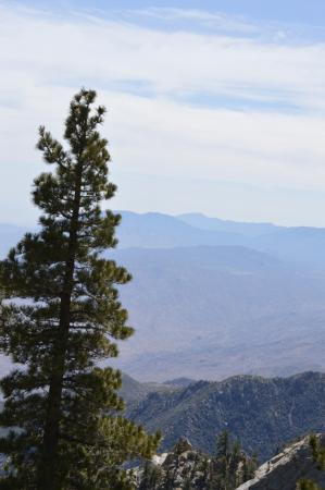 Palm Springs Aerial Tramway: Cool View