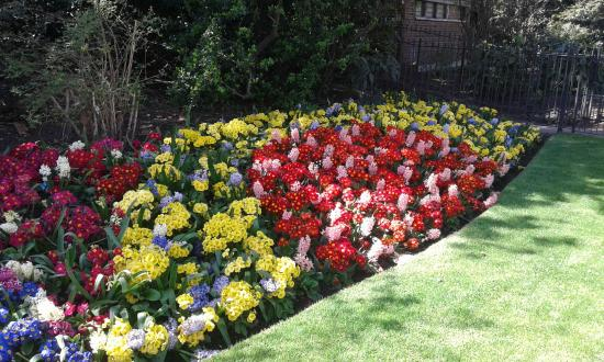 Le aiuole fiorite foto di st james 39 s park londra for Aiuole fiorite immagini