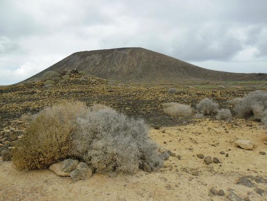 Vegetacion - Picture of Isla de Lobos, La Oliva - TripAdvisor
