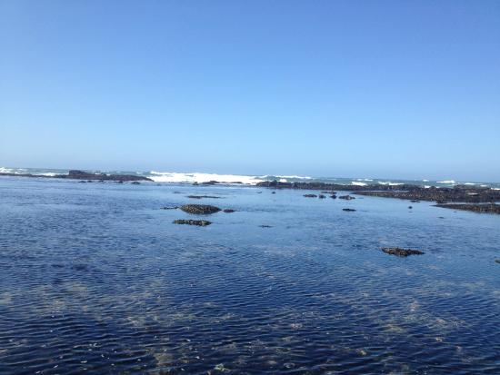 Seal Cove Inn : Marine Reserve - 5 minute walk