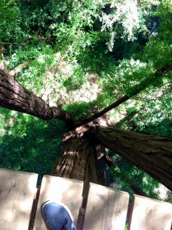 Mount Hermon Adventures : View down from the top of the tree
