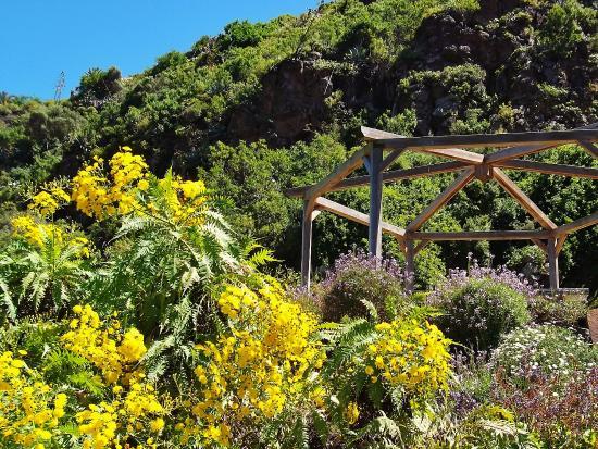Bl tenpracht im jardin botanico picture of jardin botanico viera clavijo las palmas de gran - Jardin botanico las palmas ...