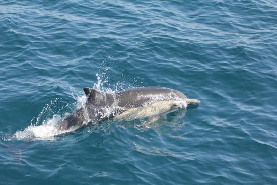 Dana Point, CA: Dolphin encounter