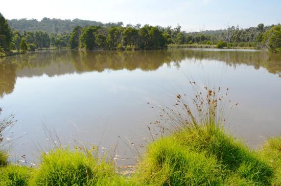 Birdsland Reserve: Sunny April morning