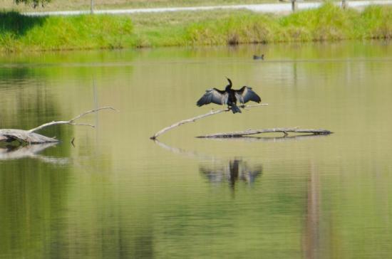 Birdsland Reserve: Beautiful reflections