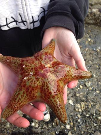 Ford's Cove Marina Waterfront Cottages: Star fish:)