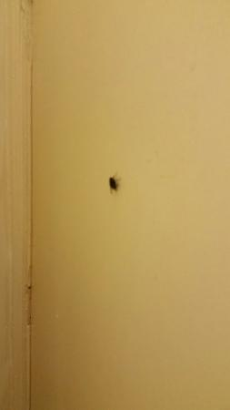 Shiraz Indian Cuisine: This was February and usually flies appear in the Summer. This was a very large fly living in th
