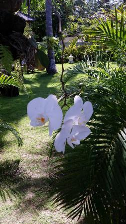 Villarossa : Beautiful gardens