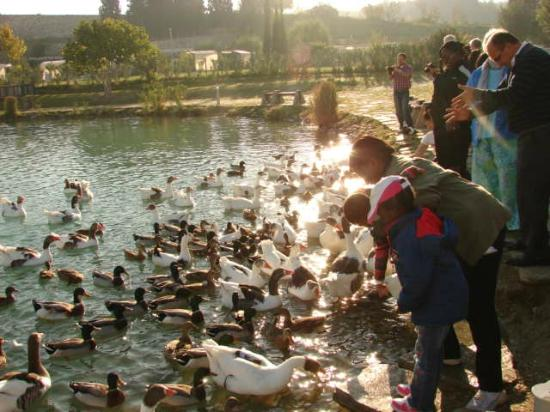 Kids feeding the ducks - Picture of Pamukkale Thermal Pools ...