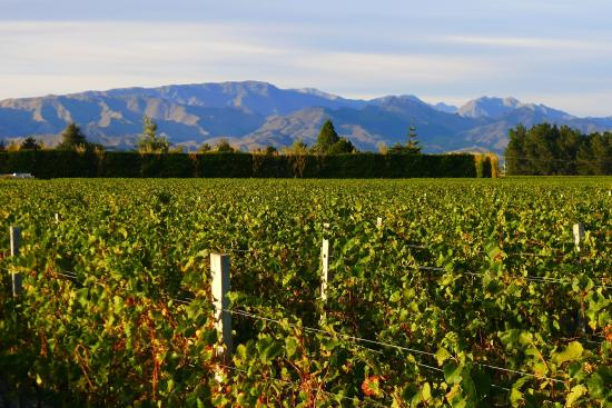 Marlborough Vintners Hotel Heritage Boutique Collection: View from Vintners Hotel Unit