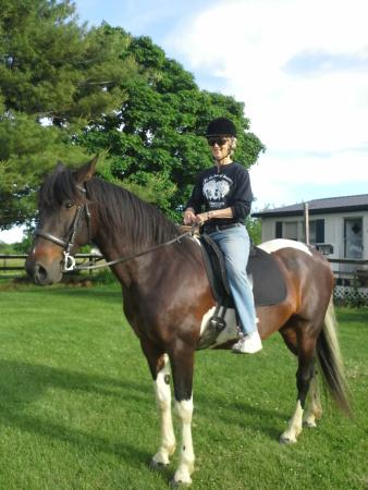 Sunburst Horsemanship School: A handsome four legged prince