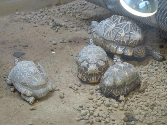 черепахи - Picture of Nogeyama Zoo, Yokohama - TripAdvisor