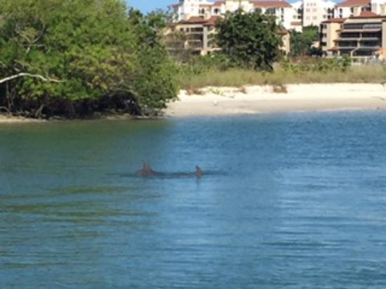 The Boat House Motel : Dolphins Everday!