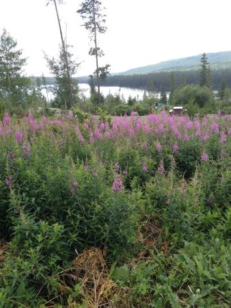 Logan Lake, Canadá: Lac Le Jeune Provincial Park
