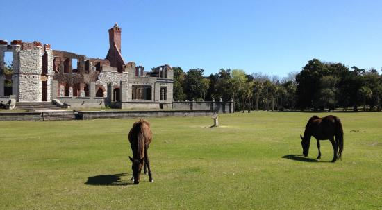 Greyfield Inn: Dungeness ruins with wild horses