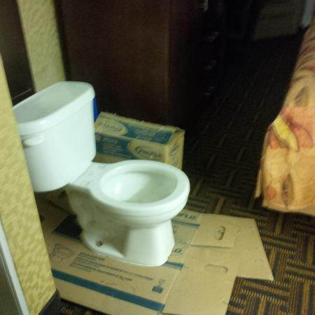 Travelodge North Battleford: This was the toilet that was in the entry way of one of the rooms we had booked.