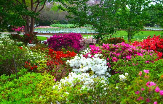 Arboreto y Jardín Botánico de Dallas