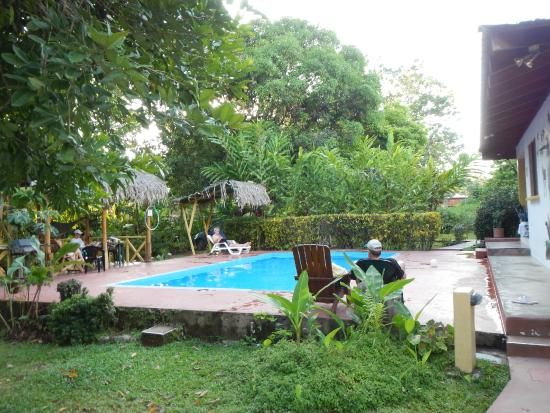Hotel El Mono Feliz : Pool is surrounded by beautiful, natural flora and foliage.