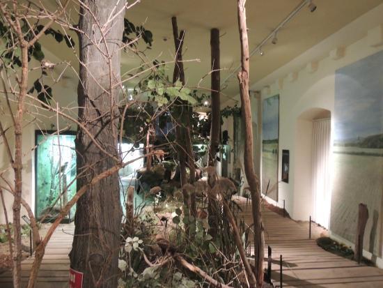 Museum Mensch und Jagd