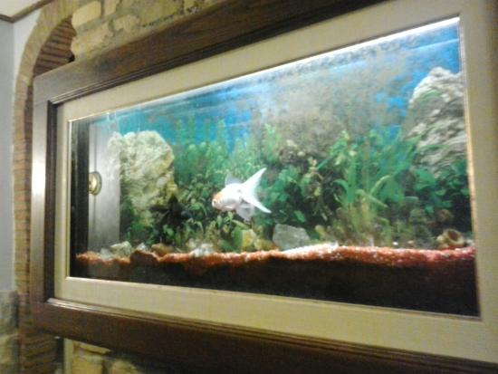 l acquario a quadro foto di il gabbiano al pigneto roma